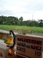 ショコラの食卓:窓からみた風景